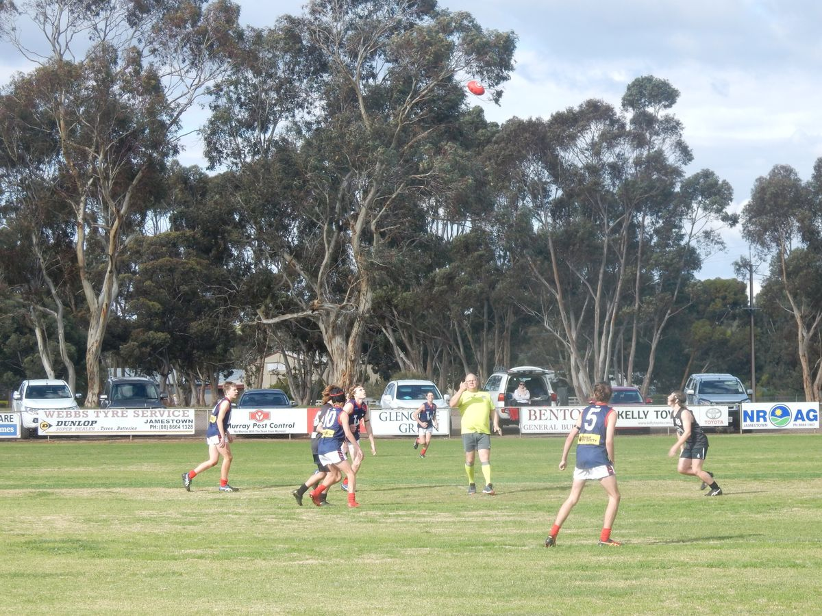 News And Events The Official North Adelaide Football Club Website Blue Band Cup 250 Gr Coach Of Team Is Marty Keller From Northern Areas With Richard Cable Being His Assistant Port Pirie